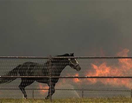 Horse runs in a corral in Rancho Temescal, Piru