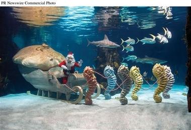 Newport Aquarium's 'Scuba Santa's' WaterWonderland
