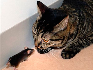 Fearless mouse approaches cat at Tokyo University