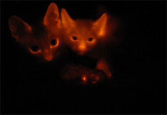 Glowing cats from South Korea